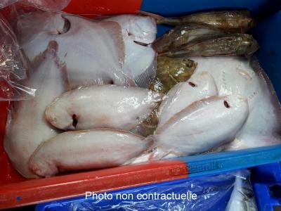 Panier de poissons disponible à partir du 29 janvier d'une valeur de 80€ + 3,6€ caisse PSE